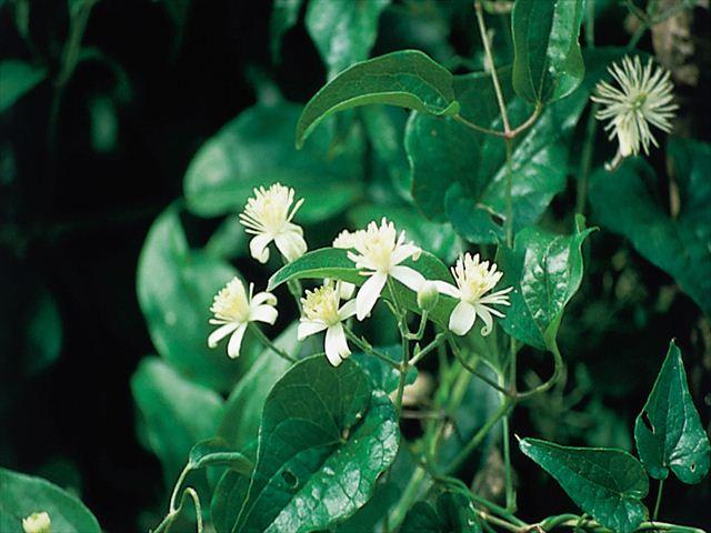 Bach Flower Remedyのイメージ